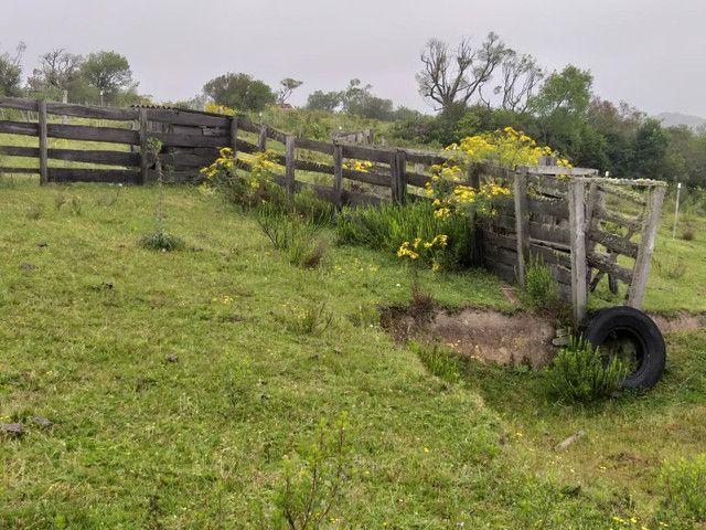 Chacara 14 hectares  - Foto 5