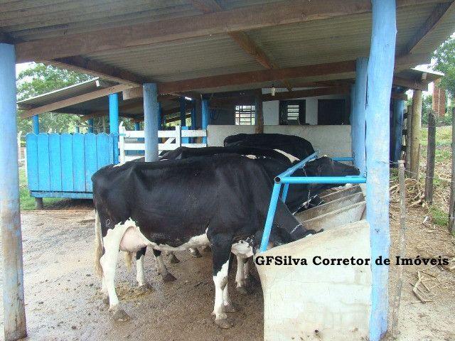 Chácara 30.000 m2 Casa 4 dorm. , suite, Píscina , fácil acesso Ref. 424 Silva Corretor - Foto 8