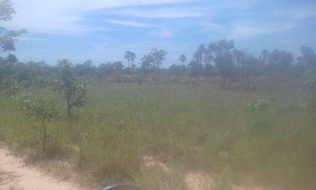 Fazenda Sabiá Dourado - Lizarda/TO - Lavoura e Pecuária - Foto 5