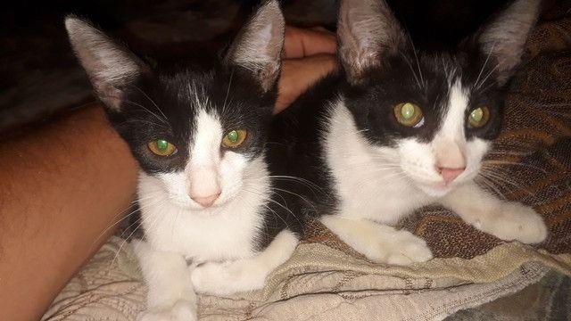 Gatos - Foto 4