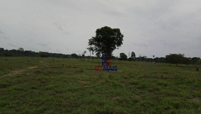 Fazenda à venda, por R$ 10.925.000 - Área Rural de Porto Velho - Porto Velho/RO - Foto 15