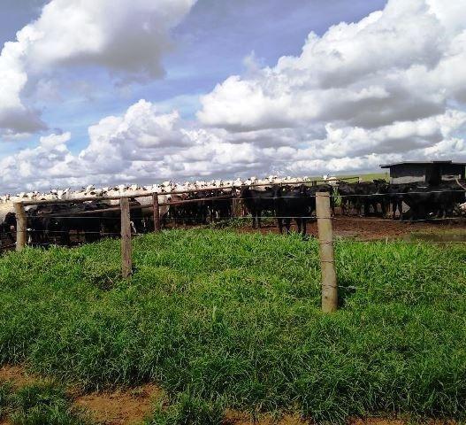 Fazenda 7900 ha Alta Floresta MT - Foto 5
