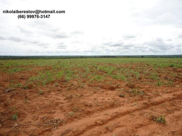 Fazenda Arrenda 1.300 hectares nordeste mt nikolaiimoveis