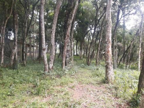São José dos Pinhais - Chácara c/ 2328m² em condomínio fechado próx. BR 277 - Foto 13