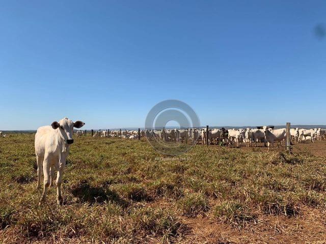Fazenda 700 ha região do manso - Foto 16