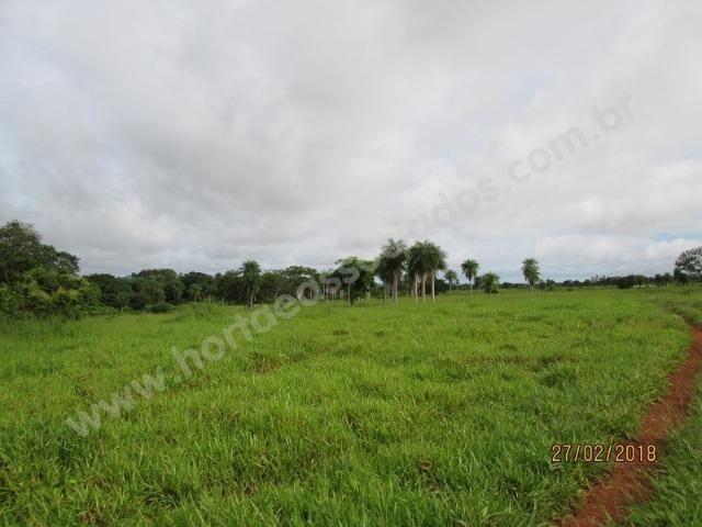 Fazenda com 881 hectares em Corumbá-MS para agricultura e pecuária - Foto 15