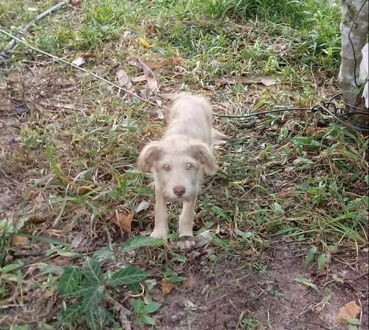 Doação desse poodle mestiço - Foto 3