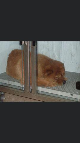 Máquina para secar animais - Foto 2