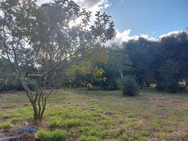 Velleda oferece B.A.R.B.A.D.A 2 hectares com cancha de futebol e frutíferas - Foto 13