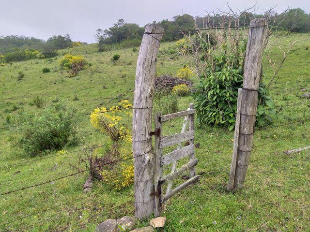 Chacara 14 hectares  - Foto 2