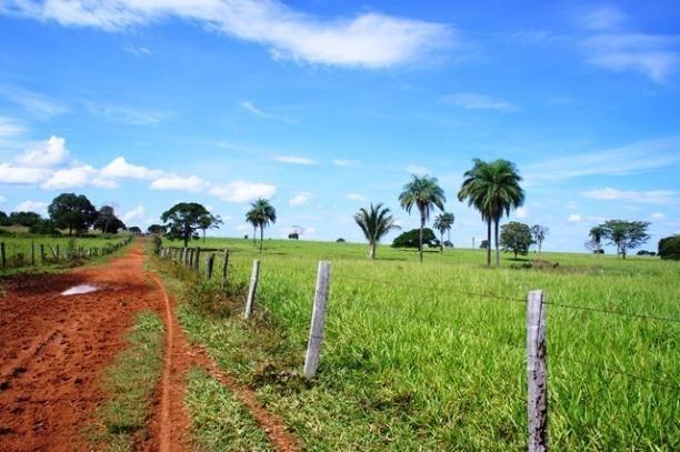 Fazenda 1750 ha N.S. Livramento MT - Foto 10