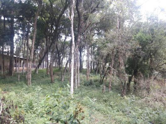 São José dos Pinhais - Chácara c/ 2328m² em condomínio fechado próx. BR 277 - Foto 15