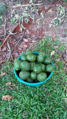 Vende-se abacate
