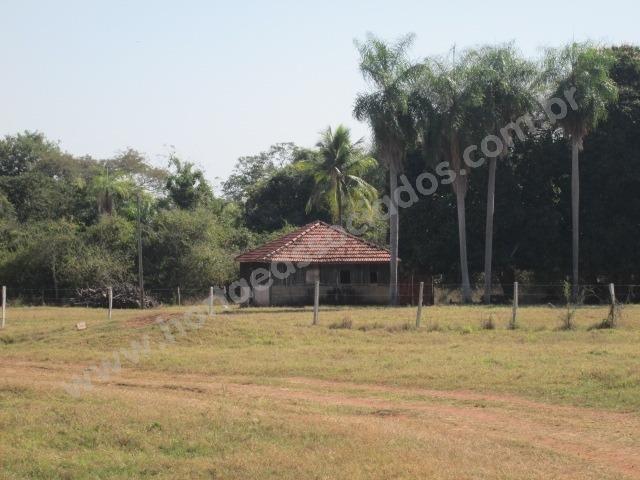Fazenda com 881 hectares em Corumbá-MS para agricultura e pecuária - Foto 8