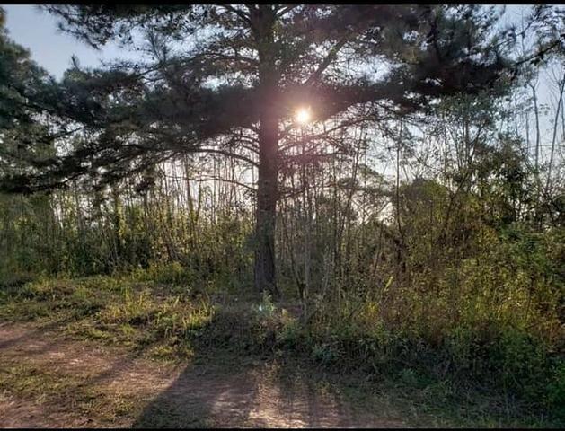 Terreno para chácara - Foto 8