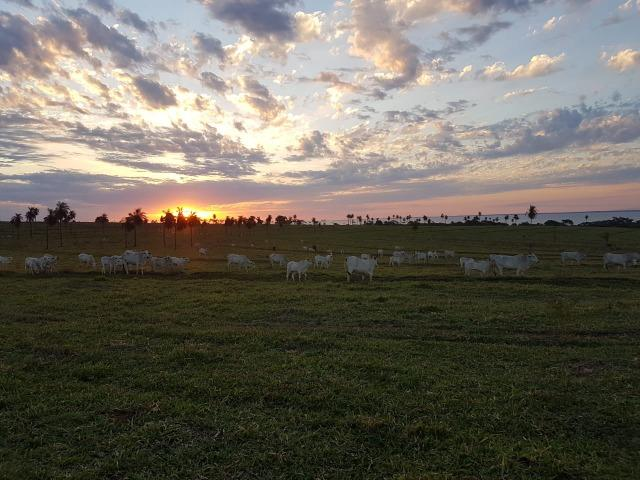 Fazenda 1.000 alqueires em rosana 70.000.000.00 - Foto 3