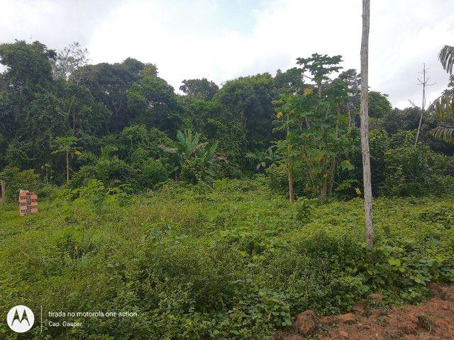 Vendo terreno em Belterra, Ótima localização - Foto 4