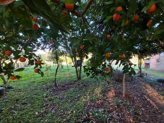Velleda oferece belíssimo sítio 1 hectare todo arborizado, ideal para lazer - Foto 18