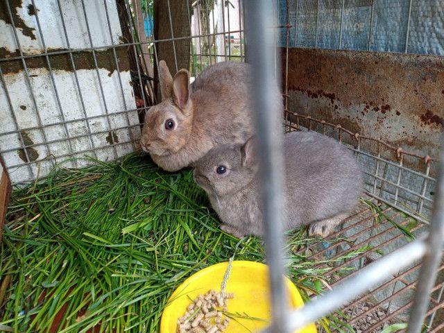 Mini coelhos - Foto 2