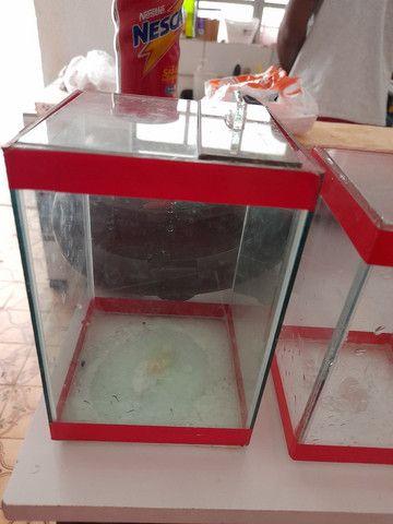 Conjunto de aquários - Foto 4