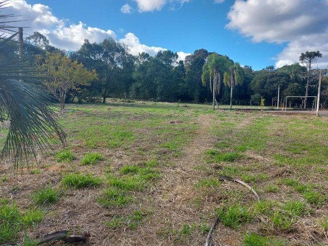 Velleda oferece B.A.R.B.A.D.A 2 hectares com cancha de futebol e frutíferas - Foto 14
