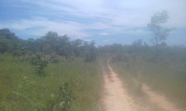 Fazenda Sabiá Dourado - Lizarda/TO - Lavoura e Pecuária