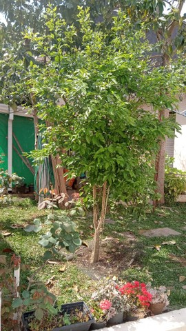 Pinturas limpeza jardim