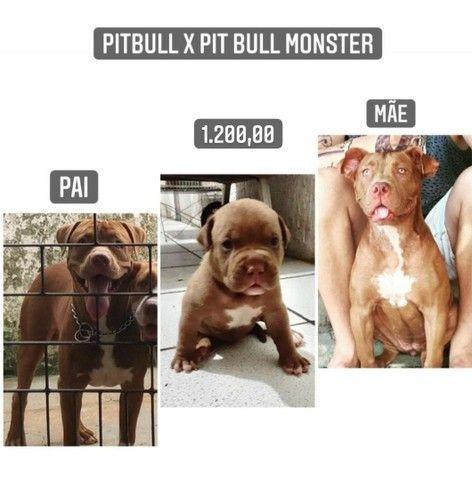 Filhote PitBull com PitBull Monster