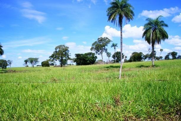 Fazenda 1750 ha N.S. Livramento MT - Foto 11