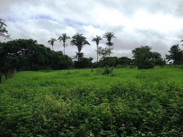 Fazenda 950 ha Rosário Oeste MT - Foto 14