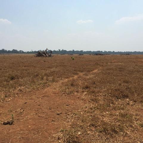 Fazenda 15000 ha 150 Km Sorriso MT - Foto 5