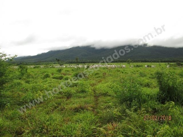 Fazenda com 881 hectares em Corumbá-MS para agricultura e pecuária - Foto 10
