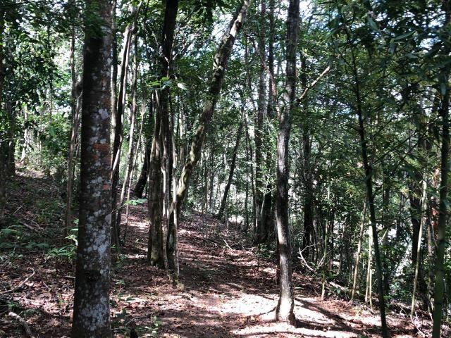 Terreno para Sítio em Esmeralda - Foto 6