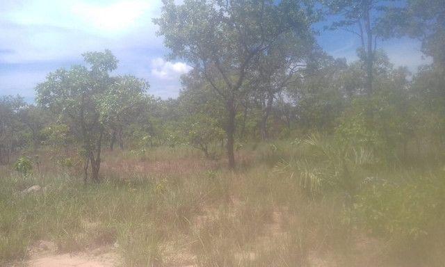 Fazenda Sabiá Dourado - Lizarda/TO - Lavoura e Pecuária - Foto 2