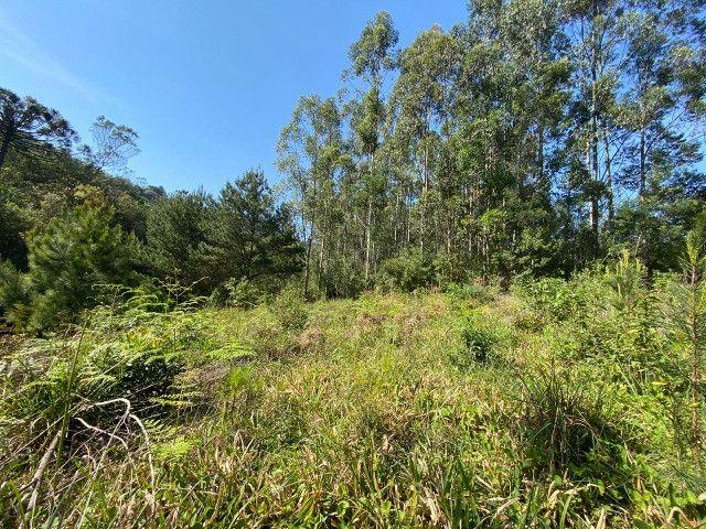 Sitio de 1 hectare em Padilha, barbada do dia - Foto 5