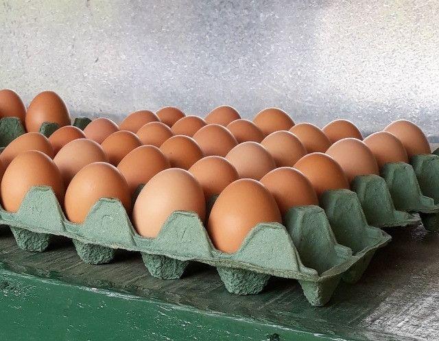 Embrapa- Ovos Galados e Pintinhos - Foto 2