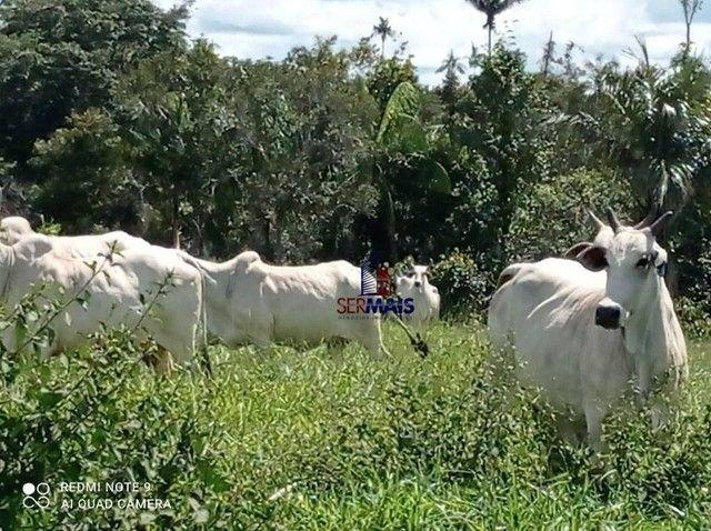 Fazenda à venda, por R$ 8.370.000 - Zona Rural - São Francisco do Guaporé/RO - Foto 3