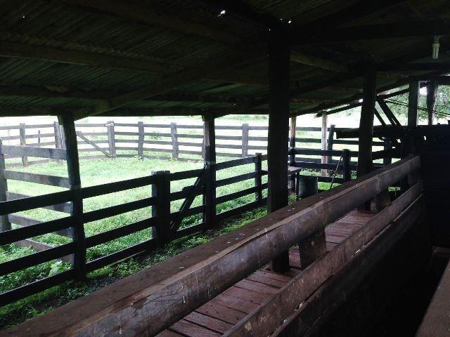 Fazenda 950 ha Rosário Oeste MT - Foto 4
