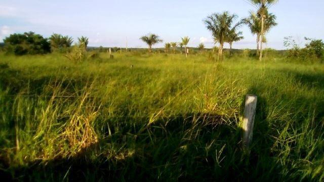 Fazenda 7900 ha Alta Floresta MT - Foto 13