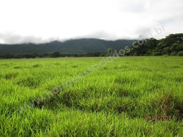Fazenda com 881 hectares em Corumbá-MS para agricultura e pecuária - Foto 4