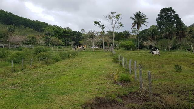 Vendo fazenda em Nova Almeida - Foto 15