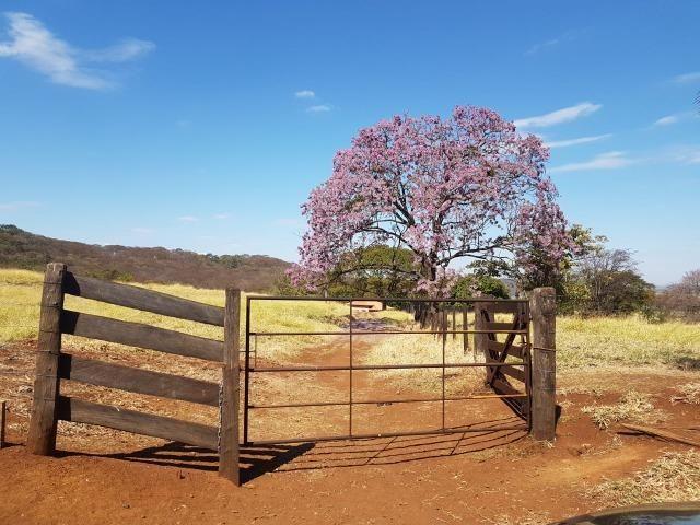 Fazenda 1.000 alqueires em rosana 70.000.000.00 - Foto 18