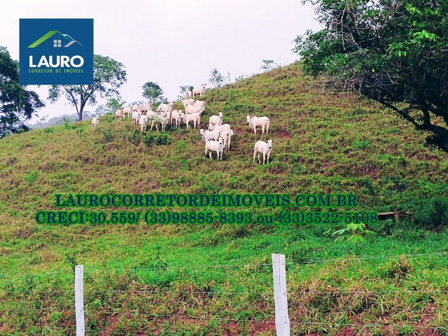 Fazenda com 20 alqueires (96,8 ha.) a 20 km de Teófilo Otoni -MG - Foto 15