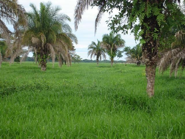 Fazenda 6,000 ha Vale do Araguaia MT. Cinematográfica - Foto 3