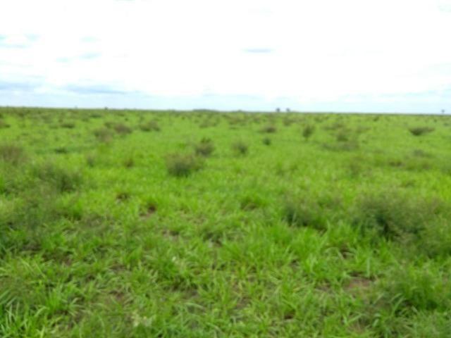 Fazenda 9.900 ha São Felix Do Araguaia - Foto 15