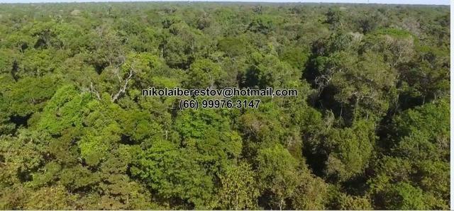 Fazenda 6500 hectares bruta norte mt nikolaiimoveis