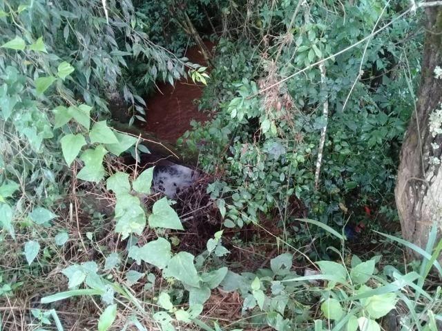 Sítio de 1 alqueire em Santa Rita de Caldas / MG-994 - Foto 2