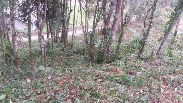 Terreno parcelado alto gasparinho - leia o anúncio - Foto 8