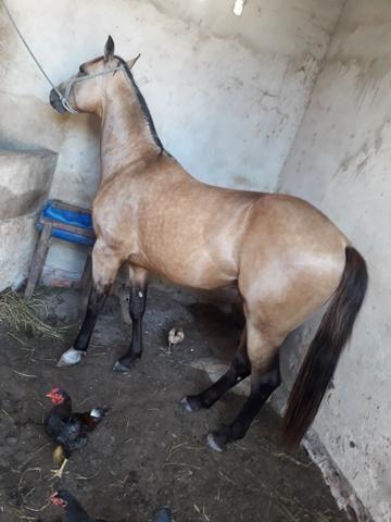 Cavalos pra vendê e trocas