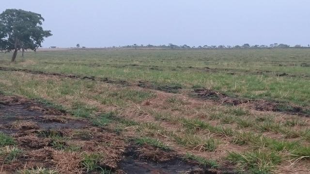 Fazenda para lavoura de 44 alqueires a venda na região de Caldas Novas GO - Foto 7